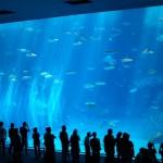 美ら海水族館(海洋博公園)